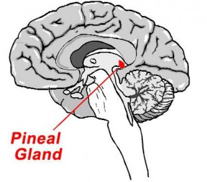 Sleep is ultimately a gift of the pineal gland!