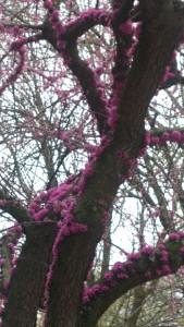 Spring Tree 1
